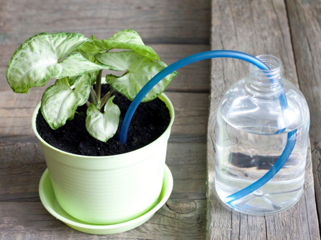 self watering pot